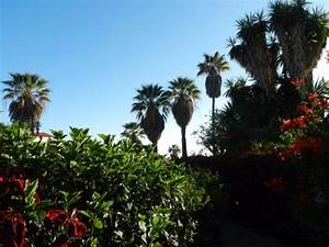 La Palma Jardin : la palma jardin los llanos de aridane spanien omd men och prisj mf relse tripadvisor ~ Markanthonyermac.com Haus und Dekorationen