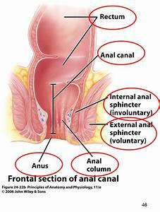 Digestive System At University Of North Carolina
