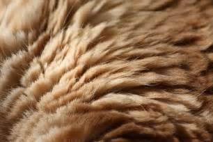 cat fur 180 animal textures the ultimate collection