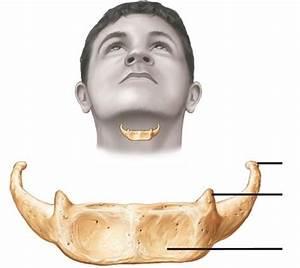 Skull  U0026 Facial Bones  Markings  Features
