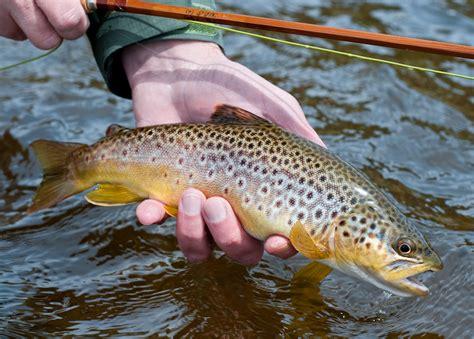 faq fly fishing   beginner  seasons adventures