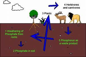 Phosphorus Analytical Inaccuracies