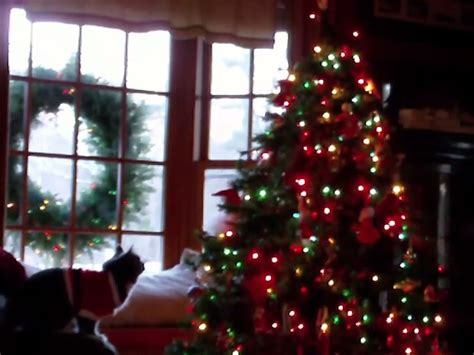 the standoff cats vs christmas trees mix106 3