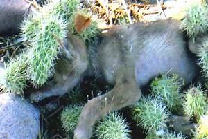 Elderly Woman Sees Coyote Pup Stuck In A Cactus, Jumps ...