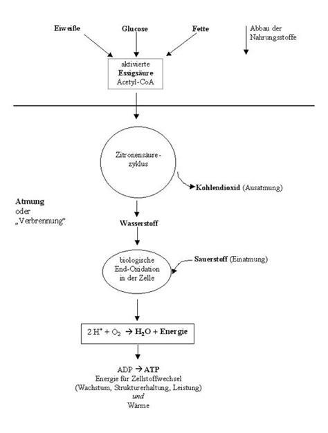biologie chemie