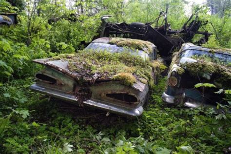 A Forest Burial Place For Abandoned Cars (30 Pics