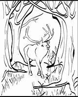 Elk Coloring Pages Animal Printable Animals Sheet 04kb 753px Animalstown Sheets Drawings Discover sketch template