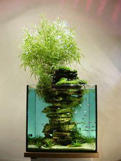 1000 id 233 es sur le th 232 me terrarium de mousse sur terrarium plantes a 233 riennes et