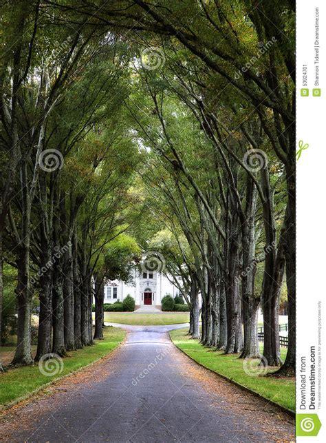 canopy  trees  road  historic home stock photo