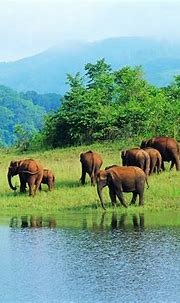 15 Sanctuaries And National Parks In India That You Must ...