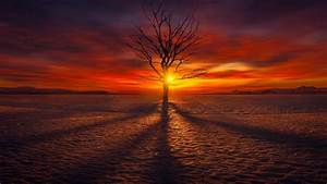 Lonely Tree In The Sunset HD Wallpaper Wallpaper Studio