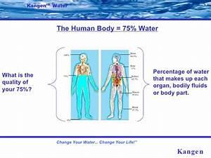 Percentage Of Water In Human Body Chart Flip Chart Demo