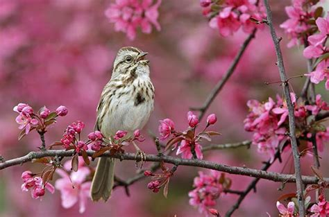 different types of birds that sing top songbirds in america birds and blooms