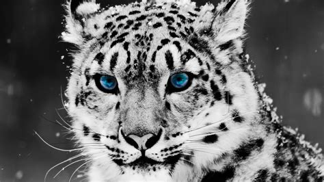 Awesome Animal Wallpapers - animals wallpaper set 1 171 awesome wallpapers