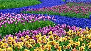 Was Sind Frühlingsblumen : fr hlingsblumen im haus oder im garten bringen mehr lebensfreude ~ Whattoseeinmadrid.com Haus und Dekorationen