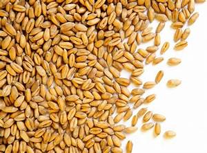 What are Wheat Berries and What Can I Do With Them?