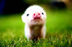 Cute Baby Farm Animals | Wallpapers Background