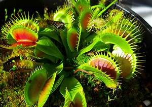 Carnivorous Plant Lecture At The Museum Of Coastal
