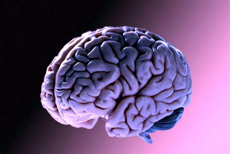 si e de massada il cervello si può ringiovanire lo dimostra uno studio