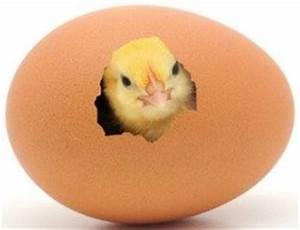 Hatching Chicken Eggs Can Be Addicting, Be Careful You May ...