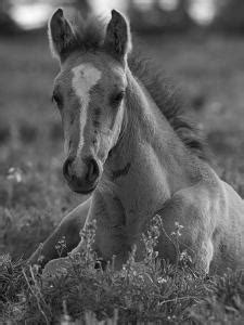 Foal Running