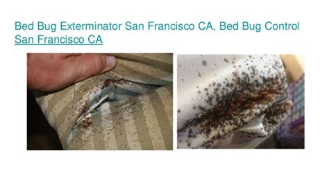 Bug Exterminator San Francisco Ca. Home Carpet Replacement Cal State Mba Ranking. Stand Up In It Theodis Ealey. Junior Python Developer College Music Courses. How To Find Construction Jobs To Bid On. Florida Limited Liability Company. Prepaid Debit Card No Ssn Health Data Analyst. Free Grant For Small Business. Alabama Debt Consolidation Nannies In Boston