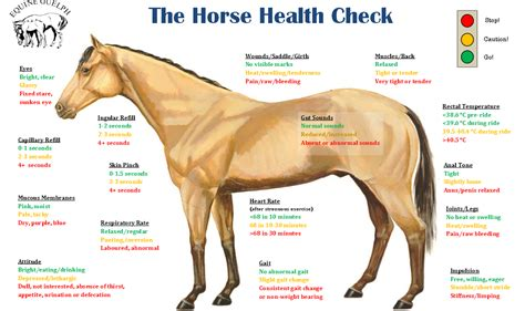 horse health horses check care healthy ecoequine equine checks basic diagram horsehealth nutrition system learn