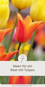 Tulpen Im Garten : tulpenzwiebeln pflanzen tulpen garten tulpen pflanzen ~ A.2002-acura-tl-radio.info Haus und Dekorationen
