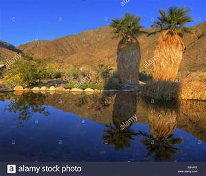 California Palm Spring Stock Photos California Palm