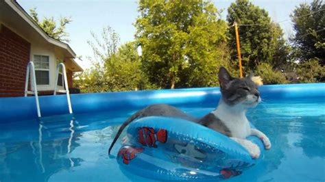 cat swiming  floating  pool gopro hero youtube