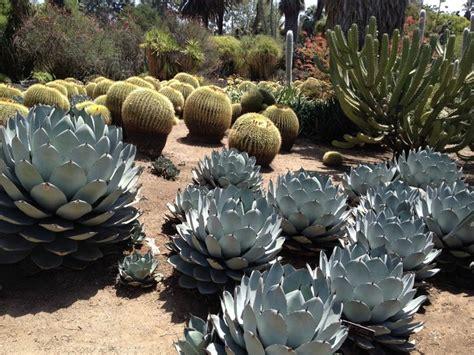huntington desert garden southwestern landscape