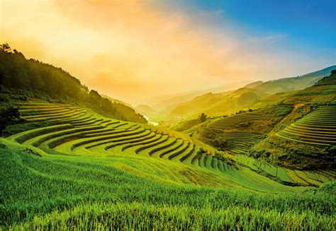 photo wallpapers terraced rice field  vietnam shop