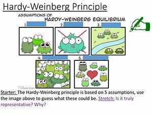 Disruptive Selection Evolution Hardy Weinberg Theory Factors That Influence