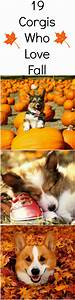 19 Corgis That Will Make You Super Excited About Fall | We ...