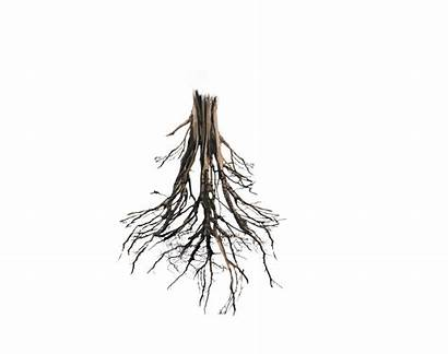 Roots Tree Trunk Root Floating Island Deviantart