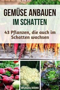 Pflanzen Im Schatten : 43 kr uter obst und gem sepflanzen die auch im schatten wachsen wurzelwerk ~ Orissabook.com Haus und Dekorationen