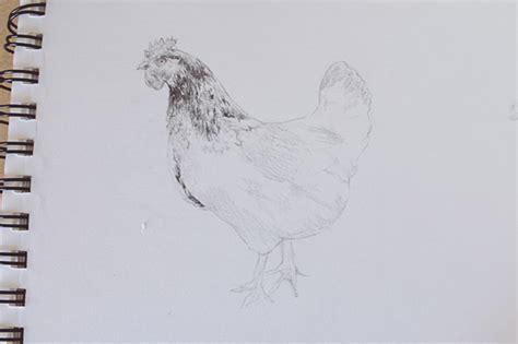 draw realistic farm animals chickens