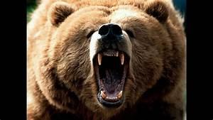 Honey Badger Narrates  Honey Bears Love Chobani