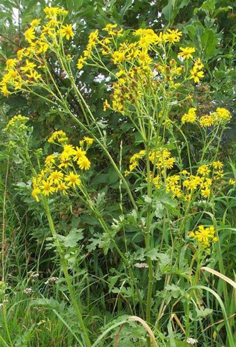 allgaeu gelb und zum verwechseln aehnlich kempten