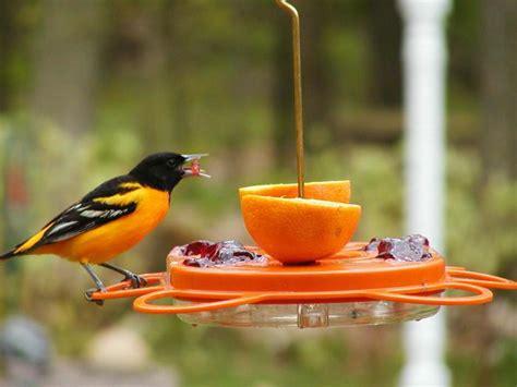 birds choice  ounce oriole fest oriole bird feeder