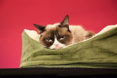 25 Signs Your Cat Is Actually In Pain According To