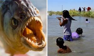 Tourist warning: Vicious piranha attacks on swimmers in ...