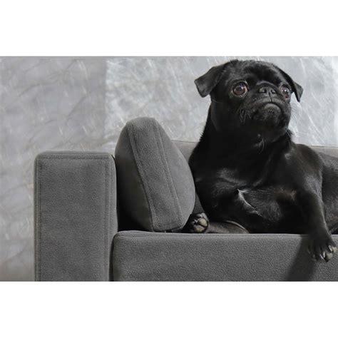 pipi de chien sur canapé en tissu canapé pour chien déhoussable original moderne