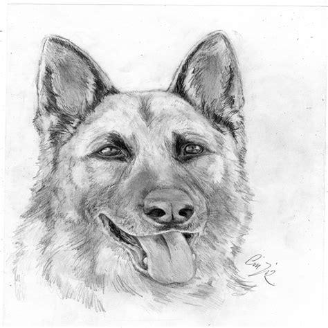best home color disegno a matita animali per quanto riguarda disegni