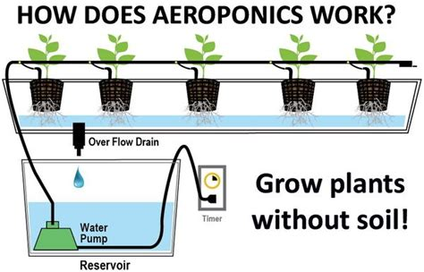 can you use a flood light to grow plants diy homemade aeroponics system grow plants without soil