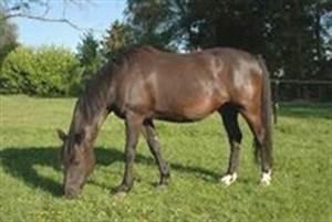 le cheval les chevaux les poneys les robes With robe bai
