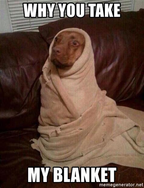 Meme Blanket - pics for gt dog in blanket meme