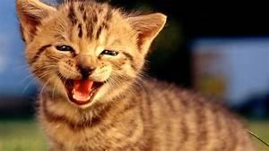 Top 10 Funny Ca... Funny Cat Videos
