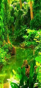 .Costa Rica,Rainforest | Water | Pinterest