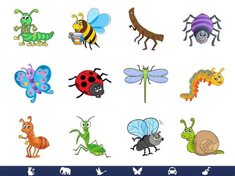 kansas preschool class bugs and insects at 970 | e31640c7772b1c106e368567d179aa75